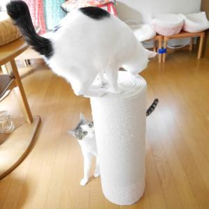 NEKO的猫マンガ<鉄砲撃ち>