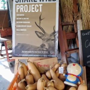 shear wild project