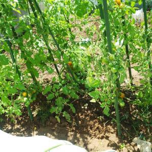 家庭菜園とプール道具作り