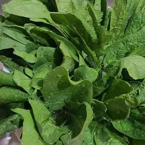 青菜のストック作り