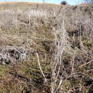 耕作放棄地の整備
