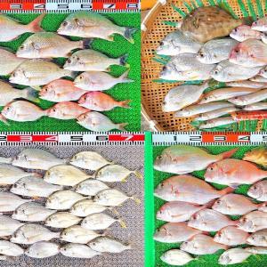 雨降らず曇りの最高の釣り日和!大潮で湾内のアタリ多数!