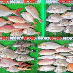 久しぶりの好天の週末に釣果写真17枚の大漁!