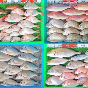 沖絶好調!ハイカラ釣りで鯛系2桁超!50cm超のネイリ!1キロのシマアジやモンズマも!