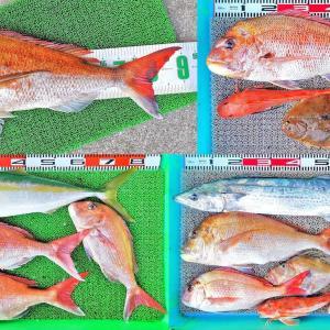 キューマル大真鯛で記録更新!ロクマル真鯛も3枚!好釣果続出!