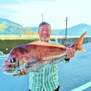 タイラバで82cmの大真鯛!ロクマル、ゴーマル真鯛も!ティップランでは1.75kgアオリイカ!