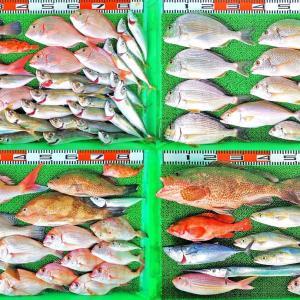 タイラバサビキでマダイ、マハタ、アジ、サバ!全体の釣果もに好調!