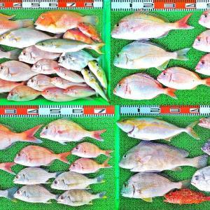 秋めいた海で沖は魚種多数!湾内もハイカラ釣りで良型マダイやキビレ!