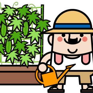 そろそろ植えたいゴーヤの保存方法を考える