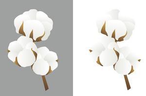 綿の種をもらったので、自家製綿でマクラを作ってみたい!