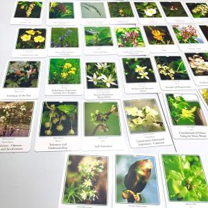 心の健康を保つための植物療法