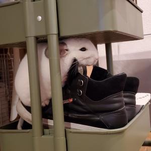 ましゅさんと靴