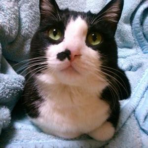 うちの猫様。