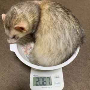 もん の身体測定- 体重だけじゃない -