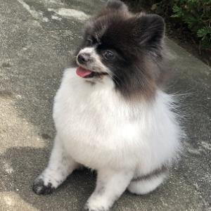 姫路キャンフェル 保護犬
