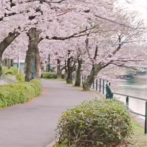 桜の写真♡生徒さんからたくさんお写真をいただきました^^