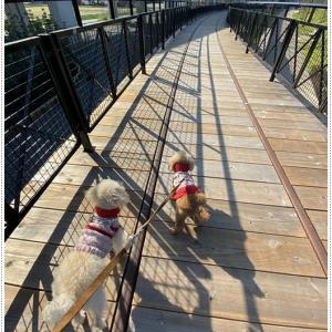 さくらと大との昨日のお散歩の続き、今日も天気よかったのにどこへも行かなかったね~(◞‸◟ㆀ)ショボン