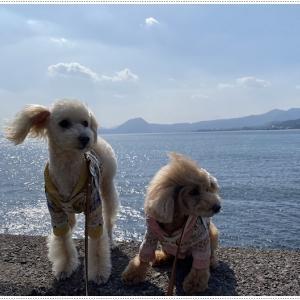 枝垂れ梅、満開!!&思いがけなく見た海がきれいで\(>∀<)/