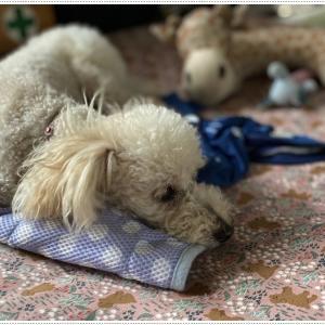 ドッグコットにおもちゃを侍らせてお昼寝( *´艸`)クスクス