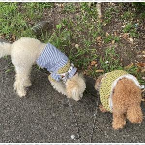 雨を心配しながらの散歩、どこ行く??