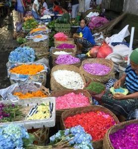 バリ島の紫陽花