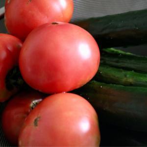 雨の中の収穫