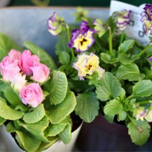 寄せ植え用の花と鉢