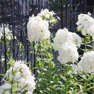 北東花壇の宿根草