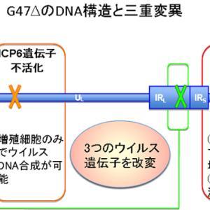腫瘍溶解ウイルスG47Δがようやく承認申請