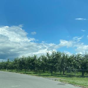 さくらんぼと林檎の山
