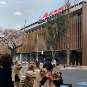 3.22板橋桜見プチオフ会