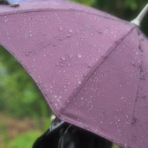 The rainy season begins, and happy ショッ/今日は和菓子の日