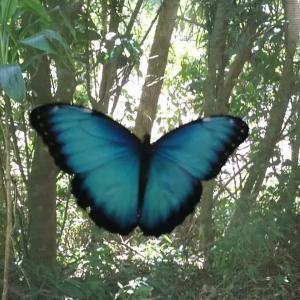 天国の青い蝶!モルフォ蝶!バタフライガーデン訪問前編/コスタリカ旅行2020/4日目②