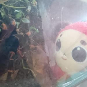 昆虫見学!ぎょええ~!?バタフライガーデン訪問後編/コスタリカ旅行2020/4日目③