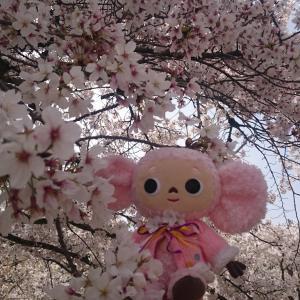 桜に包まれた京都が見たくって・・・まずは醍醐寺の三宝院から!/京都桜紀行2021/1日目①