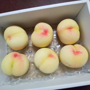 岡山の清水白桃