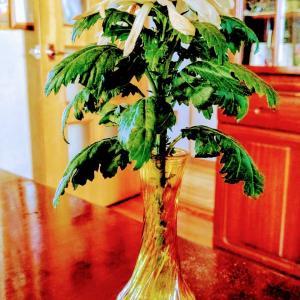 お盆の仏花に根が生えた