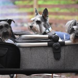 犬とキャンプ ドッグサイトでランランキャンプ