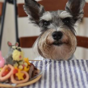 ぼく、カイト君 8歳になったのら!手作りお顔ケーキ食べるのら