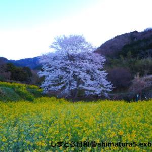 わがまち桜ハント2020