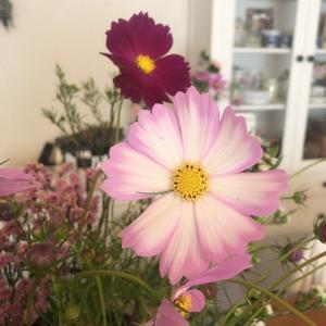 今日は秋のお花を仕入れてきました^^【和光市花教室・フラワーアレンジ・オーダーブーケ】