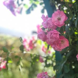 チャリティレッスンを開催します!地域の小学校にお花を♪【和光市花教室 フラワーアレンジ 花育】