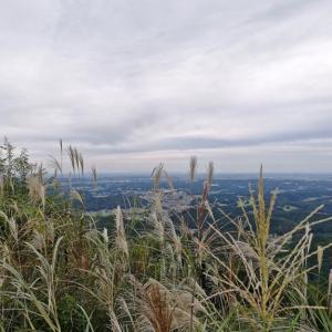 山頂はススキで溢れていた 【弓立山】