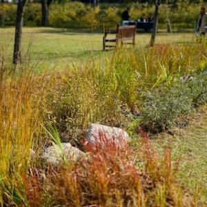 龍山家族公園、秋の写んぽ