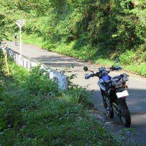 小菅村の林道