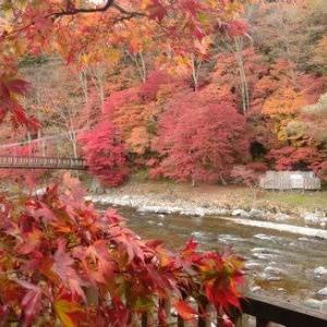 館内から見れる紅葉が見頃を迎えています