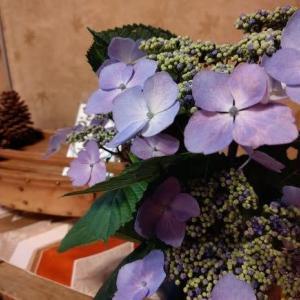 館内に紫陽花を飾りました