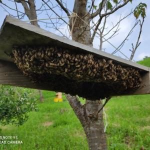 分蜂の夏、日本の夏