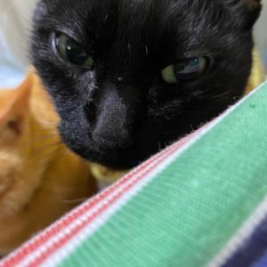 D20 低温期20日目〜排卵検査薬画像有。愛猫レレ退院!〜