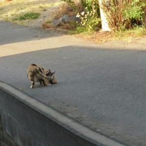 野良猫家族